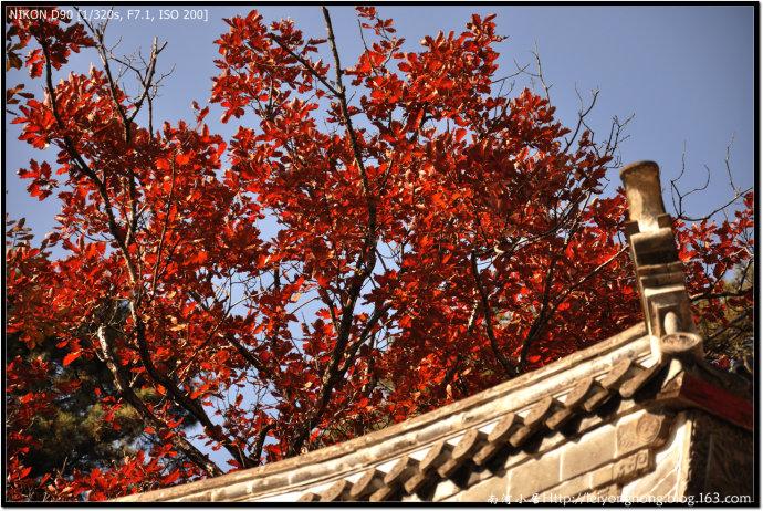 绿叶/红叶/黄叶 - 南河 - 南河小居