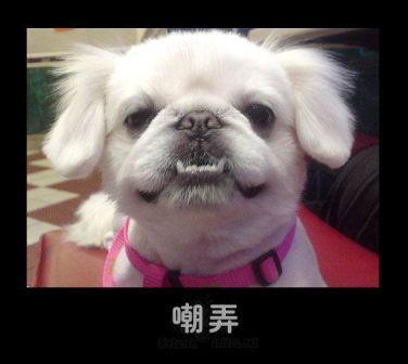 可笑的动物表情(引用) - 玉池桃红 - 玉池桃红的博客