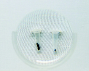 碳化稻米(右)。本报记者 薛珺 实习生 卢亚 摄