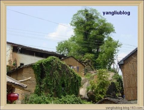 山沟沟里的风景 - 杨柳 - 杨柳的博客