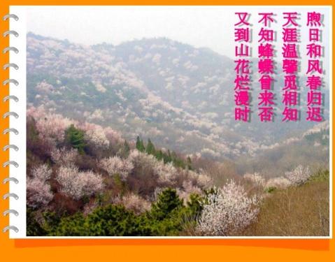 桃花山在遵化县党峪镇的一个小山村附近