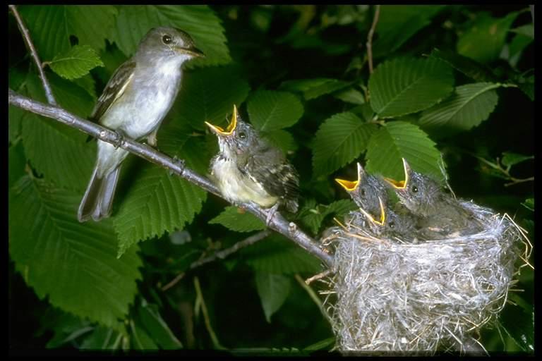 精美图片欣赏-可爱的鸟类 - 马铃薯 - 马铃薯