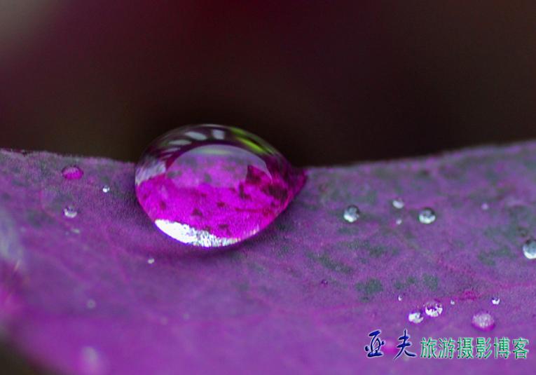(原创图文)露珠 - 高山长风 - 亚夫旅游摄影博客