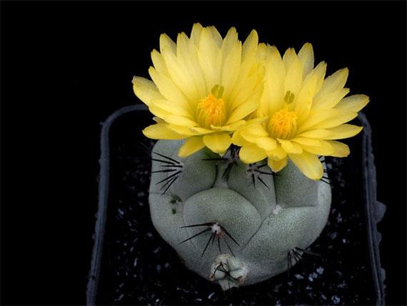 转 花中极品,太漂亮了 (献给每一位有缘来我空间的朋友) - 晶莹 - 晶莹的博客
