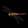 最全的蜻蜓和蝴蝶透明动画