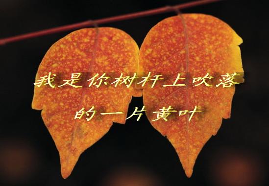 吹落的一片黄叶(BAO) - 黄靖媚 - 黄靖媚