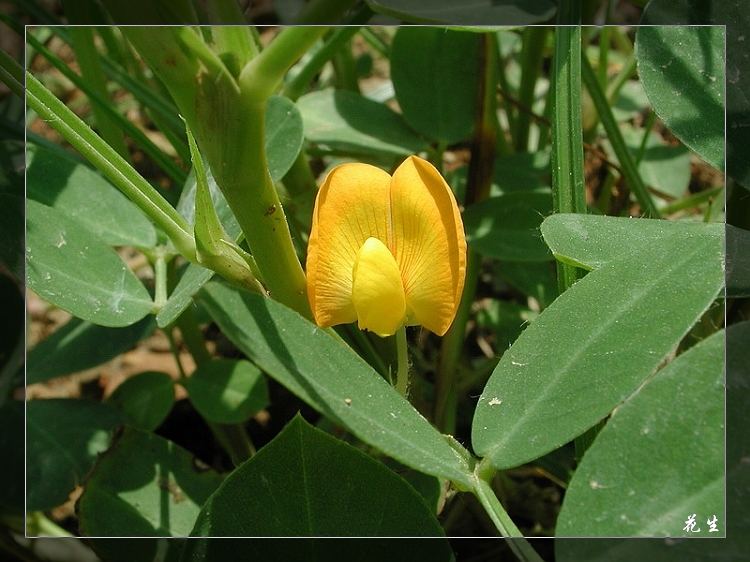 精美植物图谱(二)  - 香儿 - 香儿