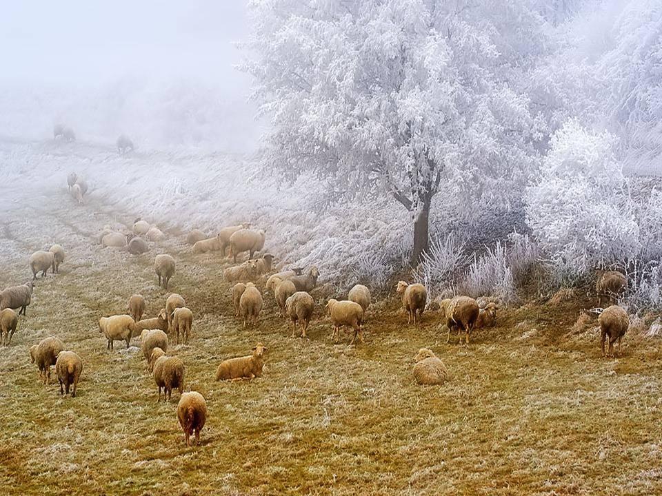 雪中景色 壮丽无比 - 蕙质兰心 - 蕙质兰心