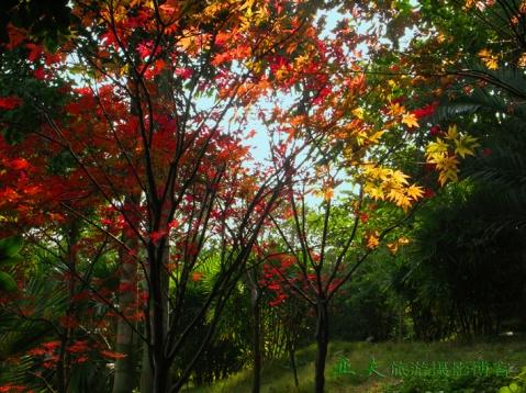 (原摄)龙泉湖蟠龙岛风光之一 - 高山长风 - 亚夫旅游摄影博客