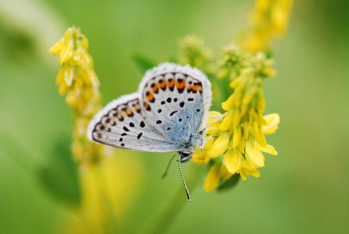 华美!世界上美艳的蝴蝶照片