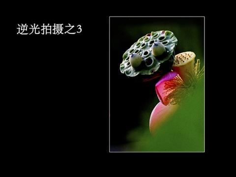 引用 :孙孝明老师《微距拍摄》课程内容 - ddp0228 - ddp0228的博客