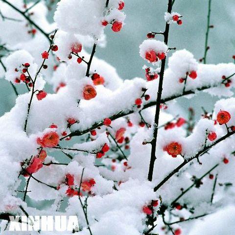 奇迹(原创) - 冰芯雪蕊 - 冰天雪地的足迹