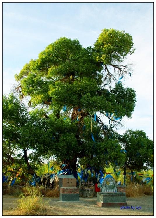 秘境中国(14)胡杨神 - 自由诗 - 人文历史自然 诗词曲赋杂谈