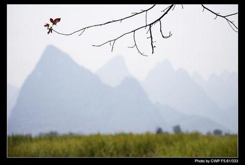 风中红枫随风 - 空山听雨 - 空山听雨:摄影是一种力量