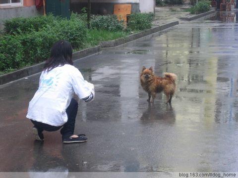 [引用] 成都警方和本中心合作,深化犬只人性化管理举措 - 天地人寰 - 生灵天地