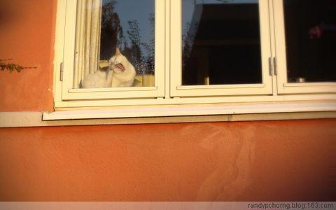 猫的橙色白日梦 - 砖头城墙 - 汉堡暂住民