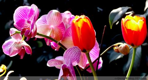 成都迎春花会—-蕙兰 - 西地笺儿 - 健康和摄影-西地笺儿的博客