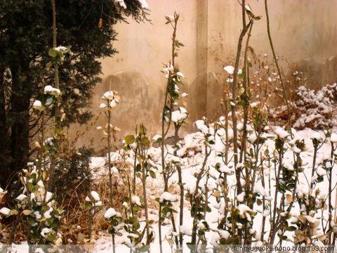 【原创】错过今冬第一场雪 - 我的网言网语 - 我的网言网语