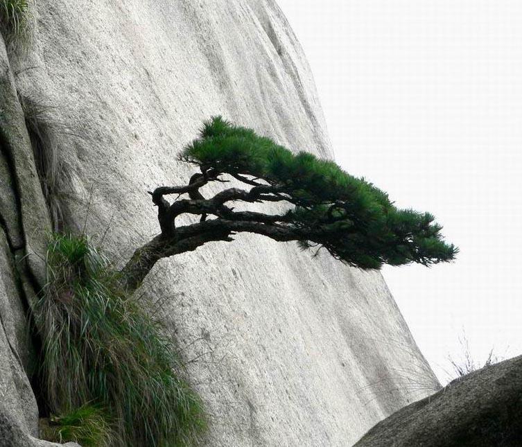 西江月·赏松感咏 - 浃漈山人 -  浃漈山人的博客