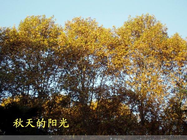 冬天了 - 雨溪翁 - 雨溪翁的田园