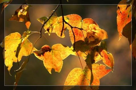 离别的秋 - ┈━═☆嫣橴 - 燕燕于飞