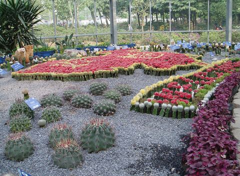 再展武汉风光--请看植物园 【原】 - 【芳仙姑】 - 健康是最佳礼物  知足是最大财富
