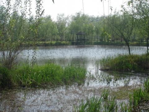 走进溱湖国家湿地公园 - 阳光月光 - 阳光月光