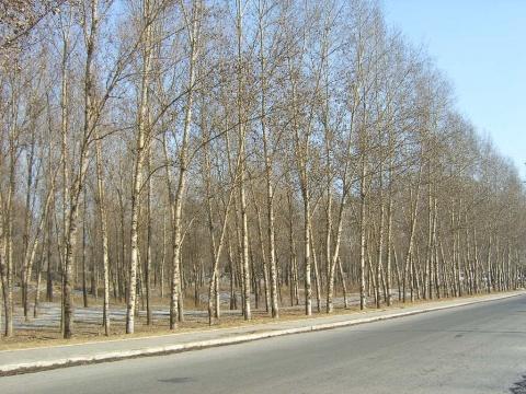 原创-现代-诗歌《冬季的清晨》文/光明之子 - 光明之子 - zhengchaoying博客