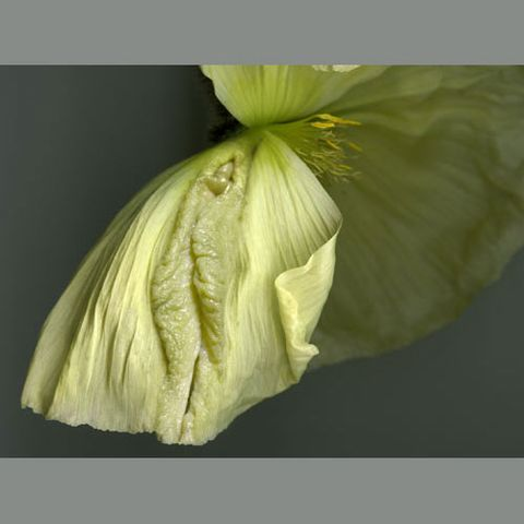 [图片收藏]《奇花异草》(3)《女人花》2 - 巴陵散人 - 巴陵散人影室