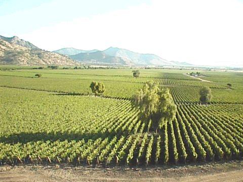 卡丽德拉酒园(Caliterra) - 天天 - 购红酒