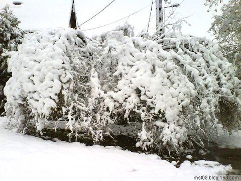 2008年底的那场大雪 - 无疆 - 无疆的世界