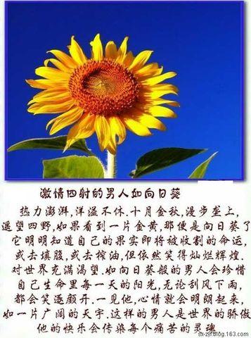 【图文音画】男人也如花 - 晓晨秋润 - 秋润香气晨晓露