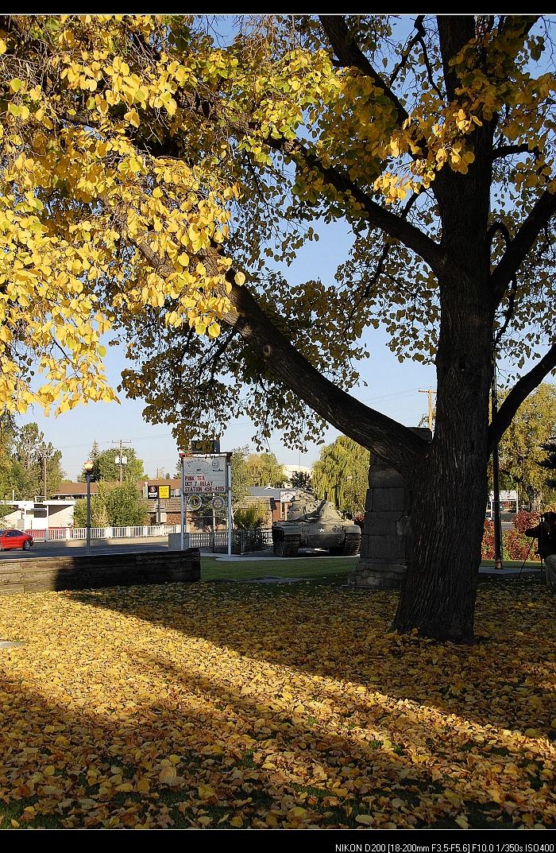 秋天在路上 - 西樱 - 走马观景
