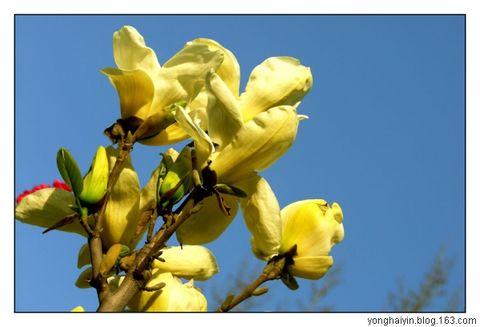 春天 - 伊人刀 - 暗焚琴木一点香
