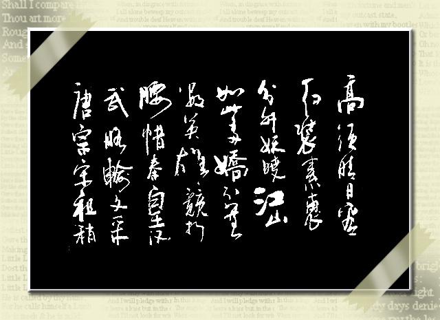2009年3月26日 - SONG.TO - 松风竹韵