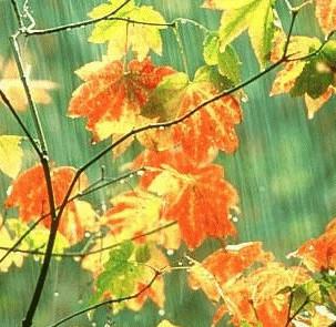 【小说】忧伤的叶子(3) - 芊芊若水 - 童心中的童话