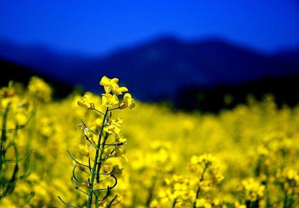 云南旅游秘籍 - 甡★侞嗄歡 - The dream of alfalfa