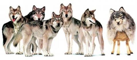 (动态图片)19.狼和羊 - 异乡客 - 异乡客的博客