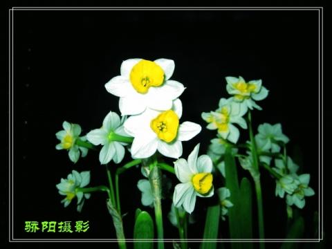 邮票上的十大名花 - 骄阳 - 骄  陽  de 博客