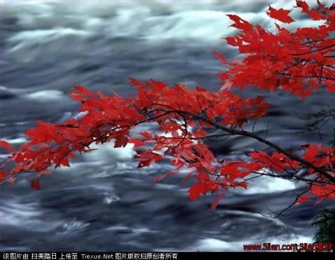 秋 - 雨中百合 - 百合花园