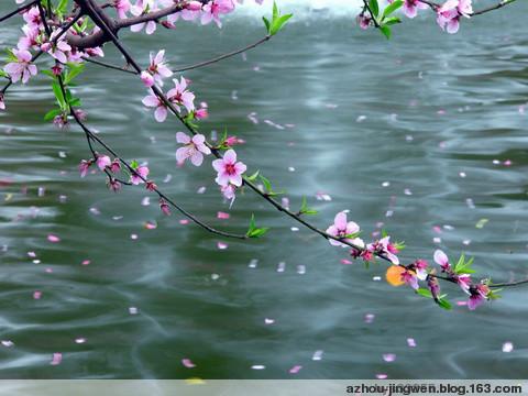 [同题诗会.原创]面对春天 - 阿文 - 阿文