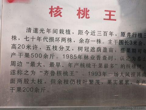 """牛年春节游蒿滩""""市""""(自驾游) - 午马 - 午马游记"""