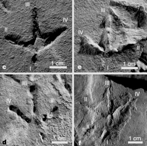 有限元分析将改变对恐龙足迹的认识(图文) - 邢立达 - 邢立达的恐龙频道