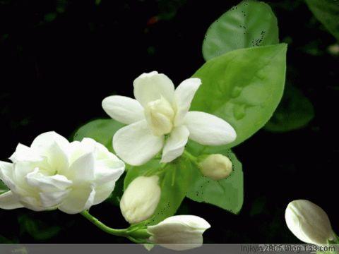 我的说明 - 青青茉莉花 - 保护自然.崇尚真理.热爱生活