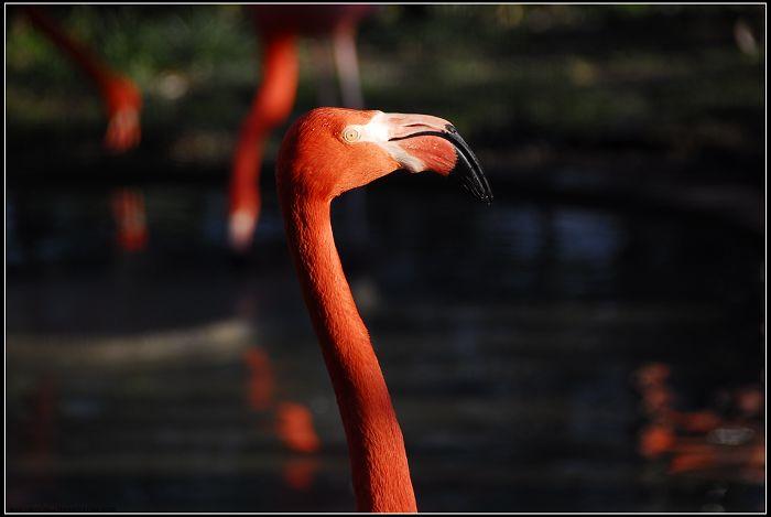 原创摄影-红红的鸟 - 桃花公子 - 徒步夜行者
