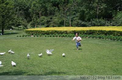 [原创]泰丰公园一日闲咏 - Kajia - 脚印一点点