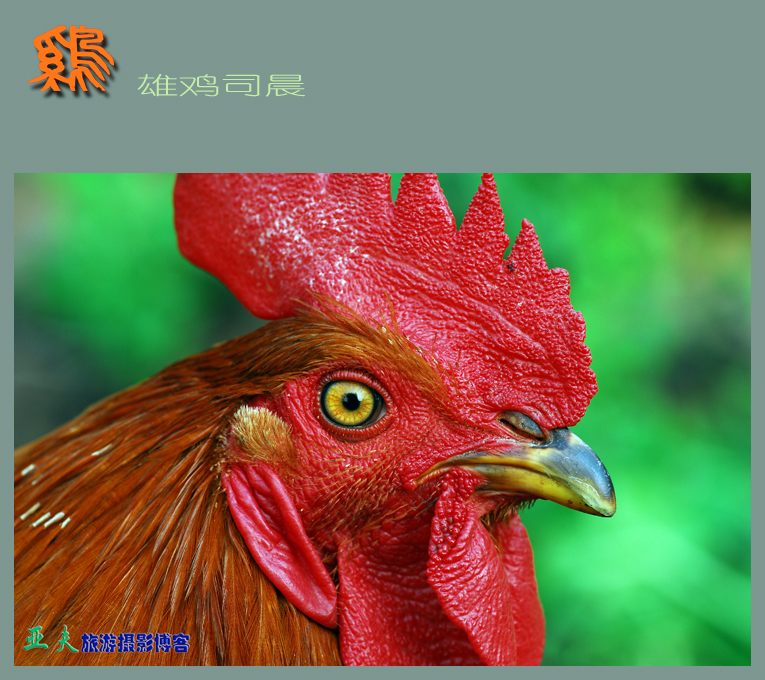 (原摄)雄鸡司晨 - 高山长风 - 亚夫旅游摄影博客