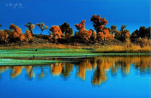 (原创)红柳魂--心路漫漫 第四篇  62首 - 疏勒河的红柳 - 疏勒河的红柳