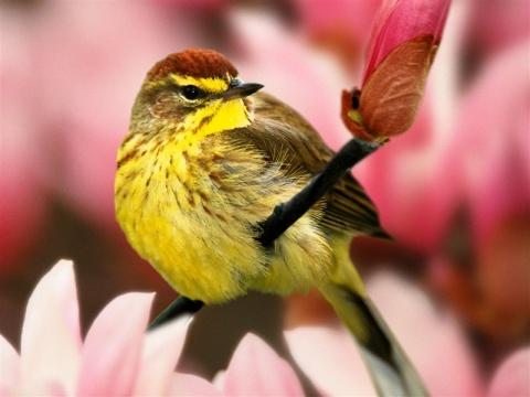 彩鸟 - ※kaisana※ - kaisana 的博客