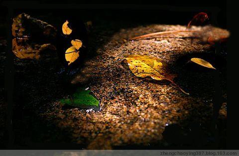 原创-现代-《秋》文/光明之子 - 光明之子 - 光明之子的博客